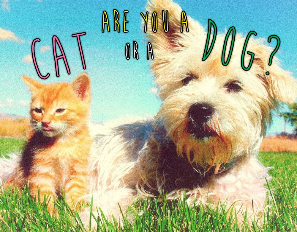 Are You a Cat or a Dog? Dog quizzes, Pets, Dogs