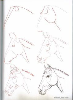 wie pferde pferd himmel gezeichnet 3599 32 zeichnen lernen. Black Bedroom Furniture Sets. Home Design Ideas