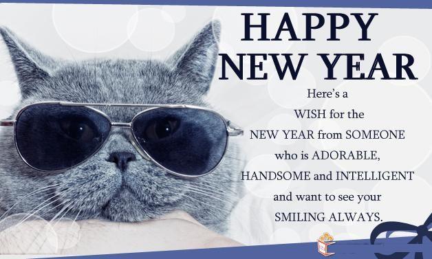funny cat new year wish 2016   new year 2016   Pinterest   Year 2016 ...