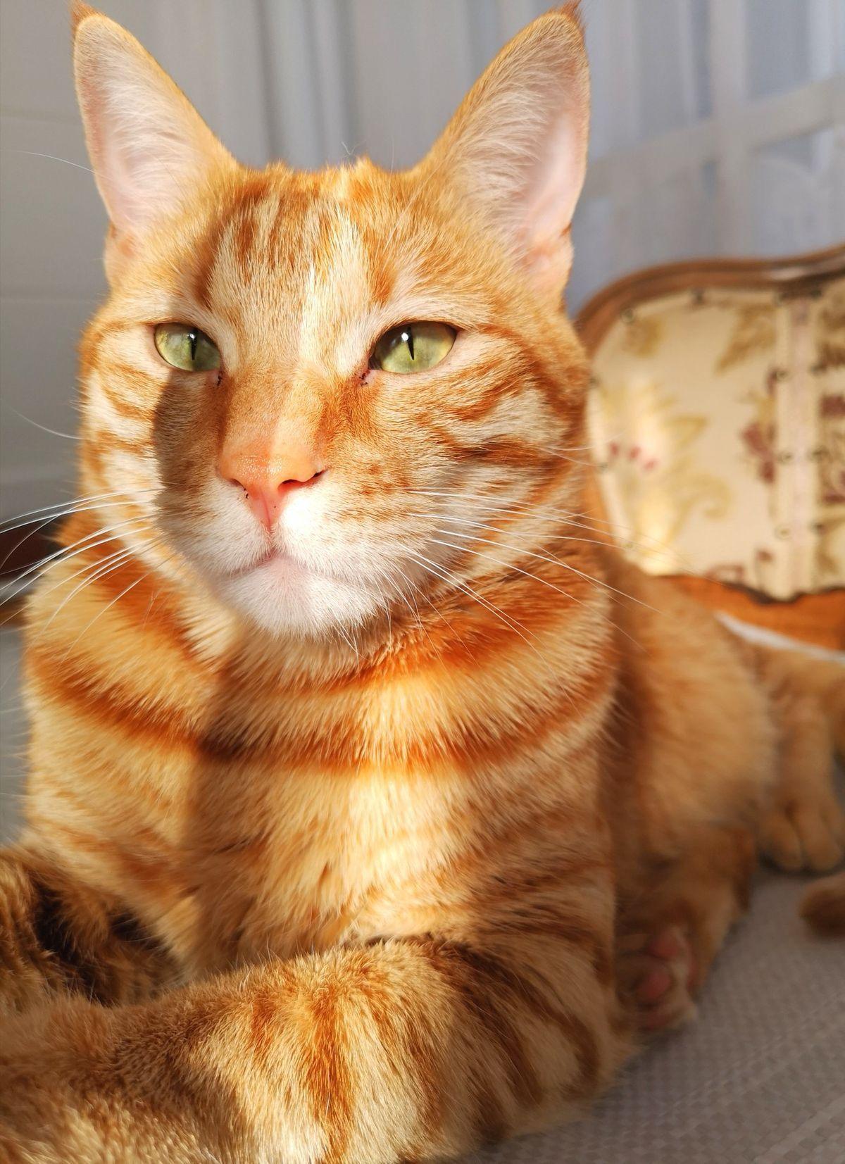 I Need A Kitten Image By Haley Haynes Orange Tabby Cats Tabby Cat Pretty Cats