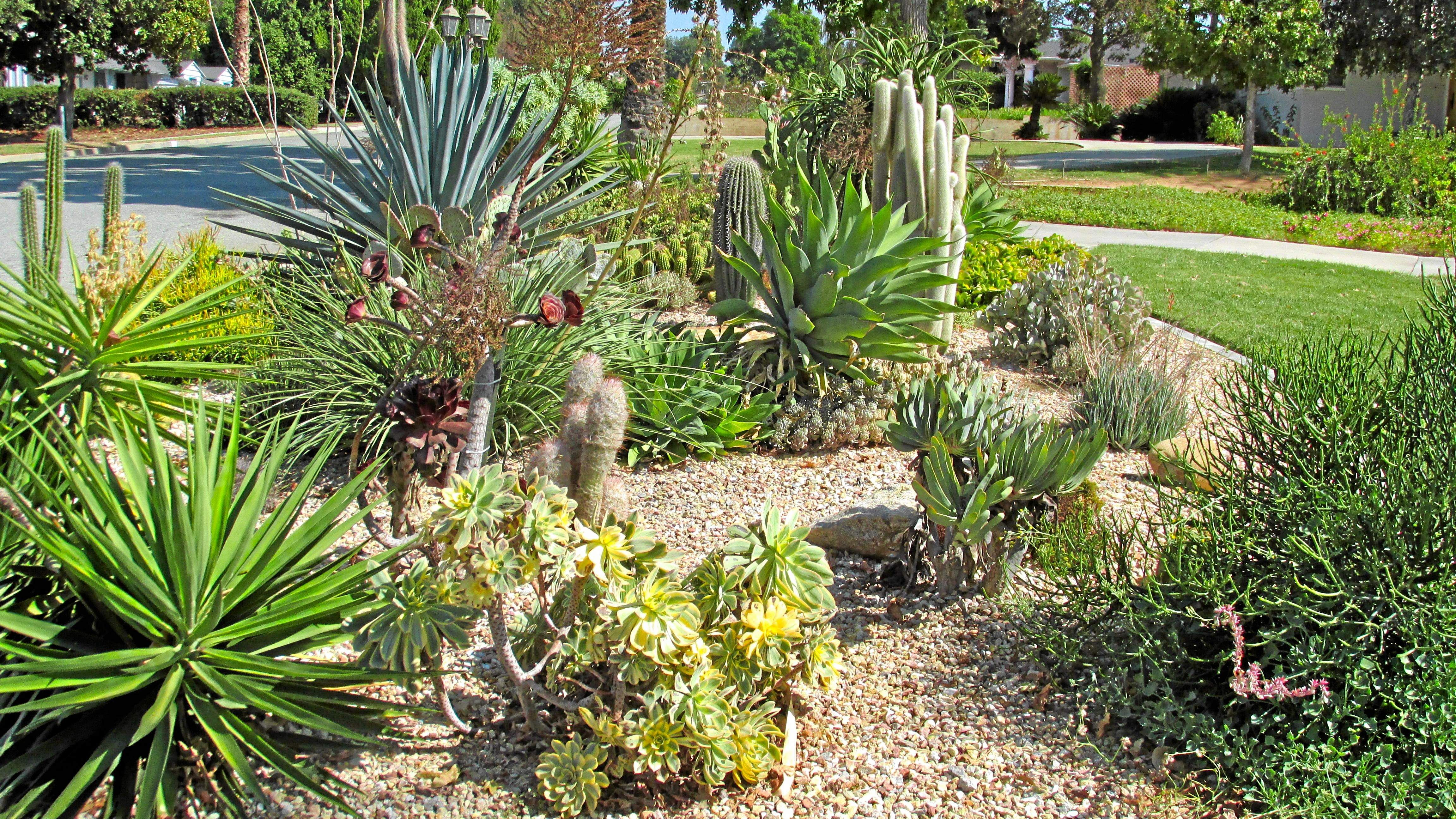 Experts Offer Advice For Drought Tolerant Landscaping In Southern California Aidaia Gardening