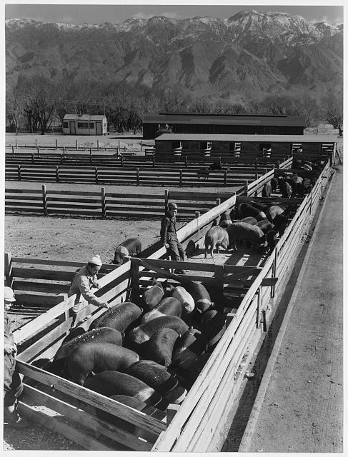 Hog Farm Manzanar Relocation Center California With Images