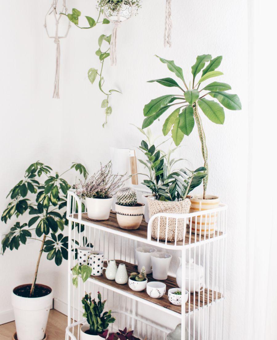 Pflanzenecke im Wohnzimmer  Wohnzimmer pflanzen, Pflanzen