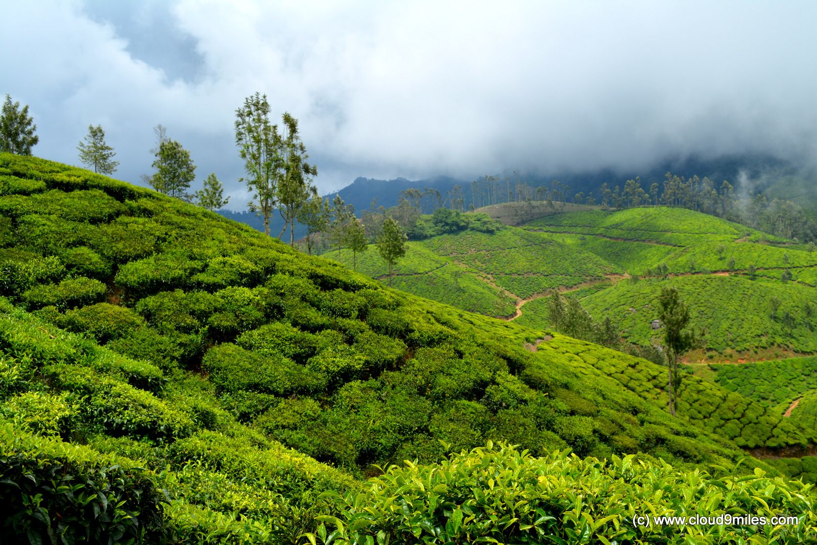 Majestic Munnar Cloud9miles Indian Travel and Fashion