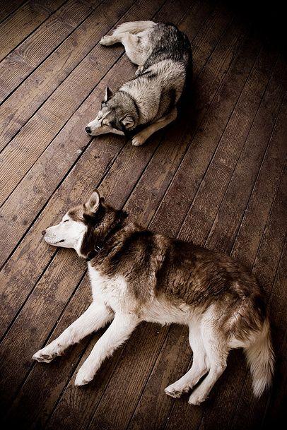 Love Huskies :)