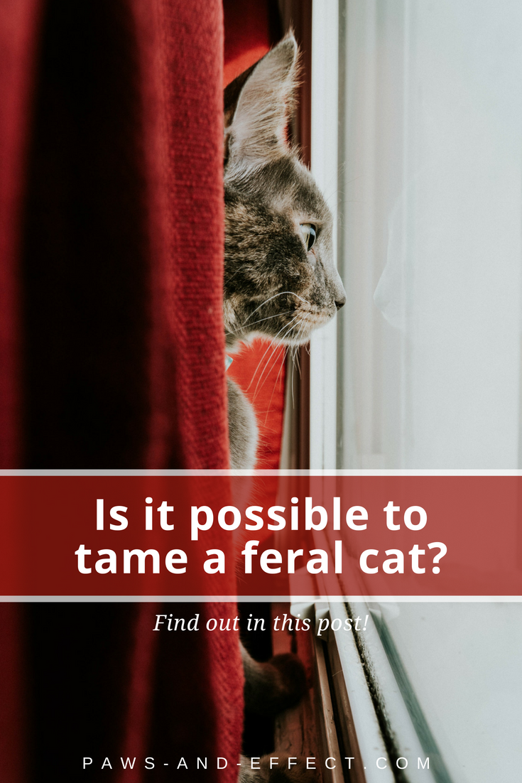 Is It Possible to Tame a Feral Cat? Paws and Effect in