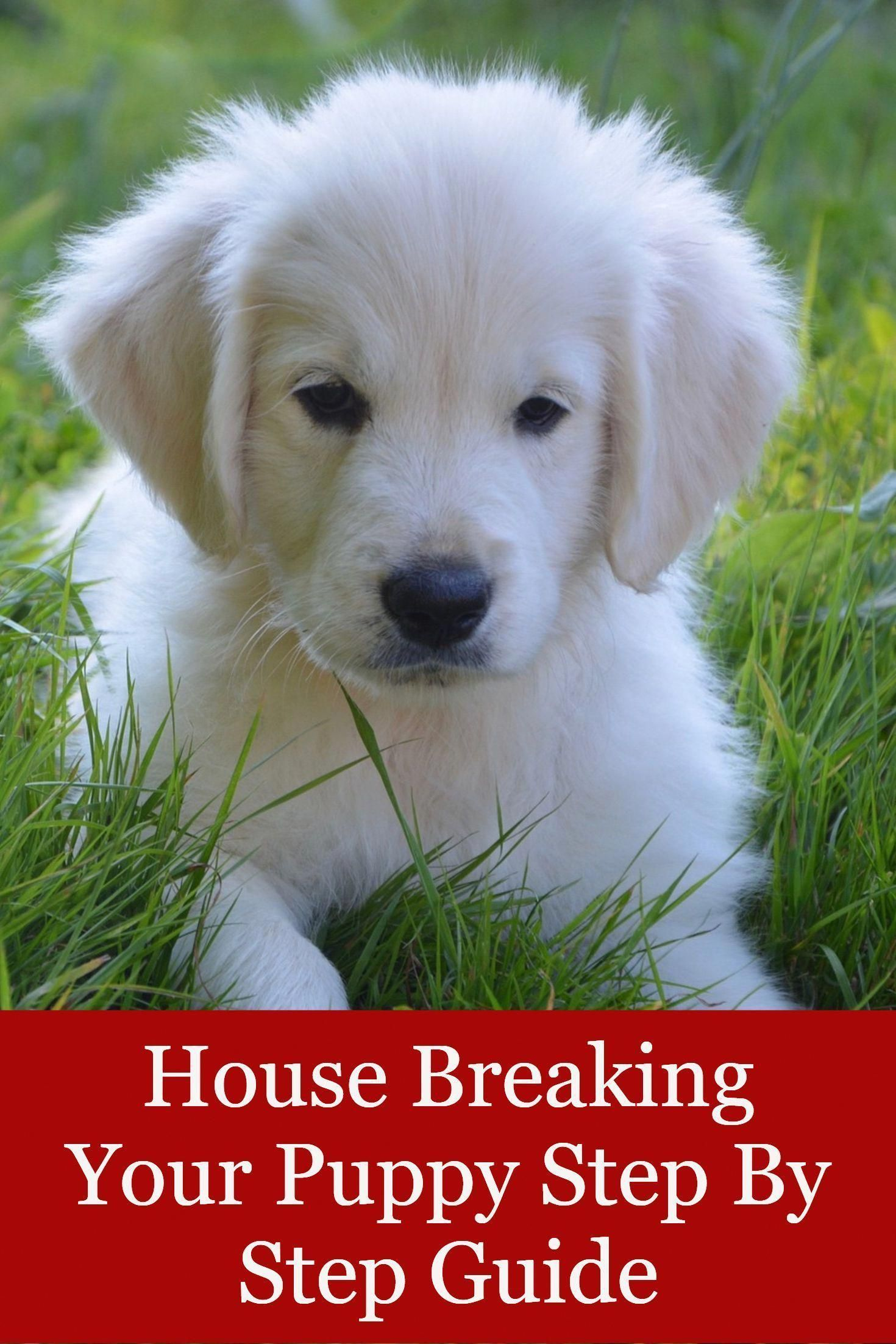 House Breaking Your Puppy Step By Step Guide Dog Training