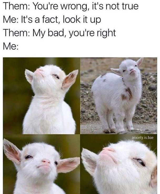 Photo Google Photos Funny Animal Jokes Funny Animal Memes Funny Relatable Memes