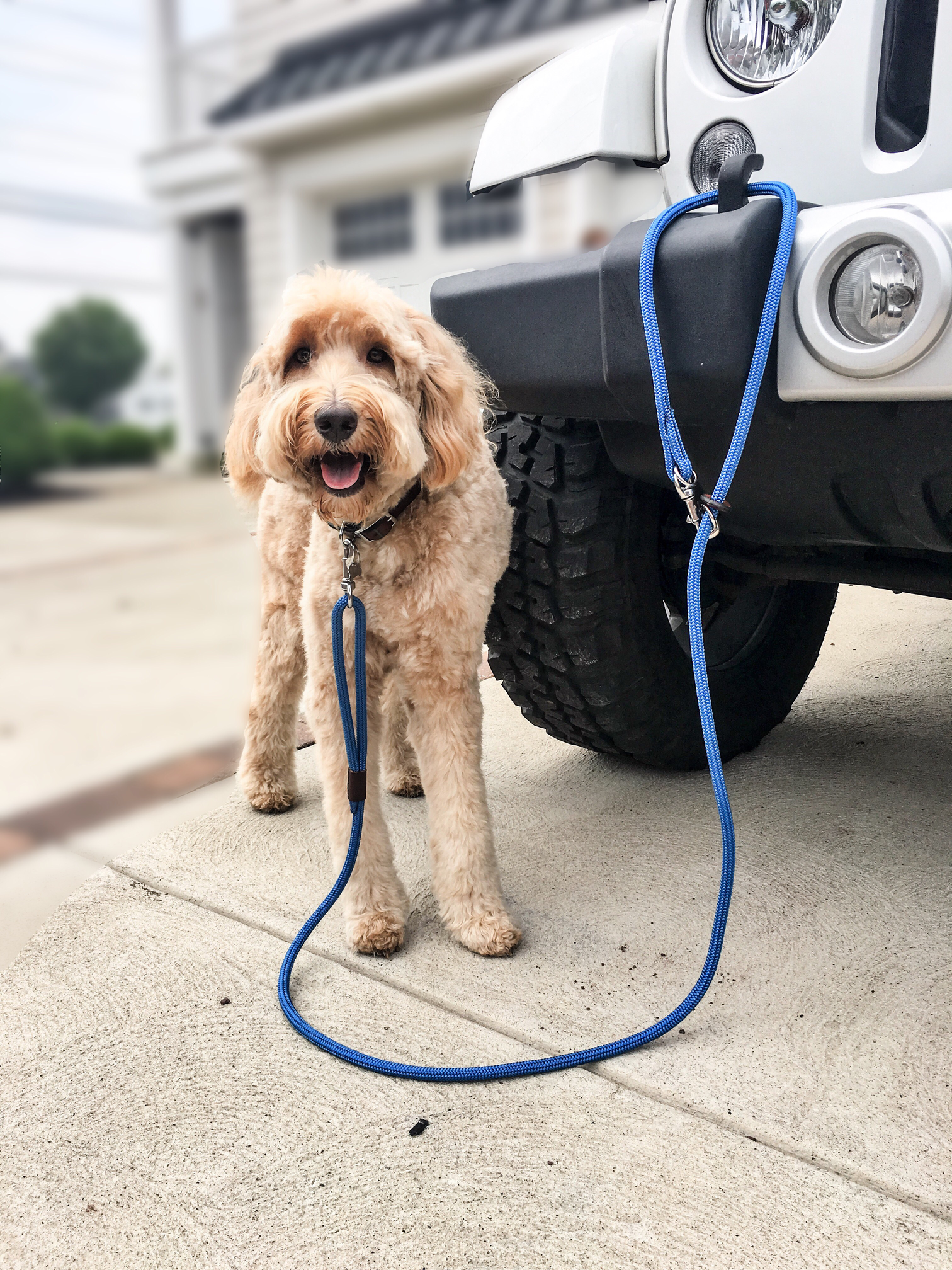 Rope Leash Dog accessories, Jeep dogs, Dogs