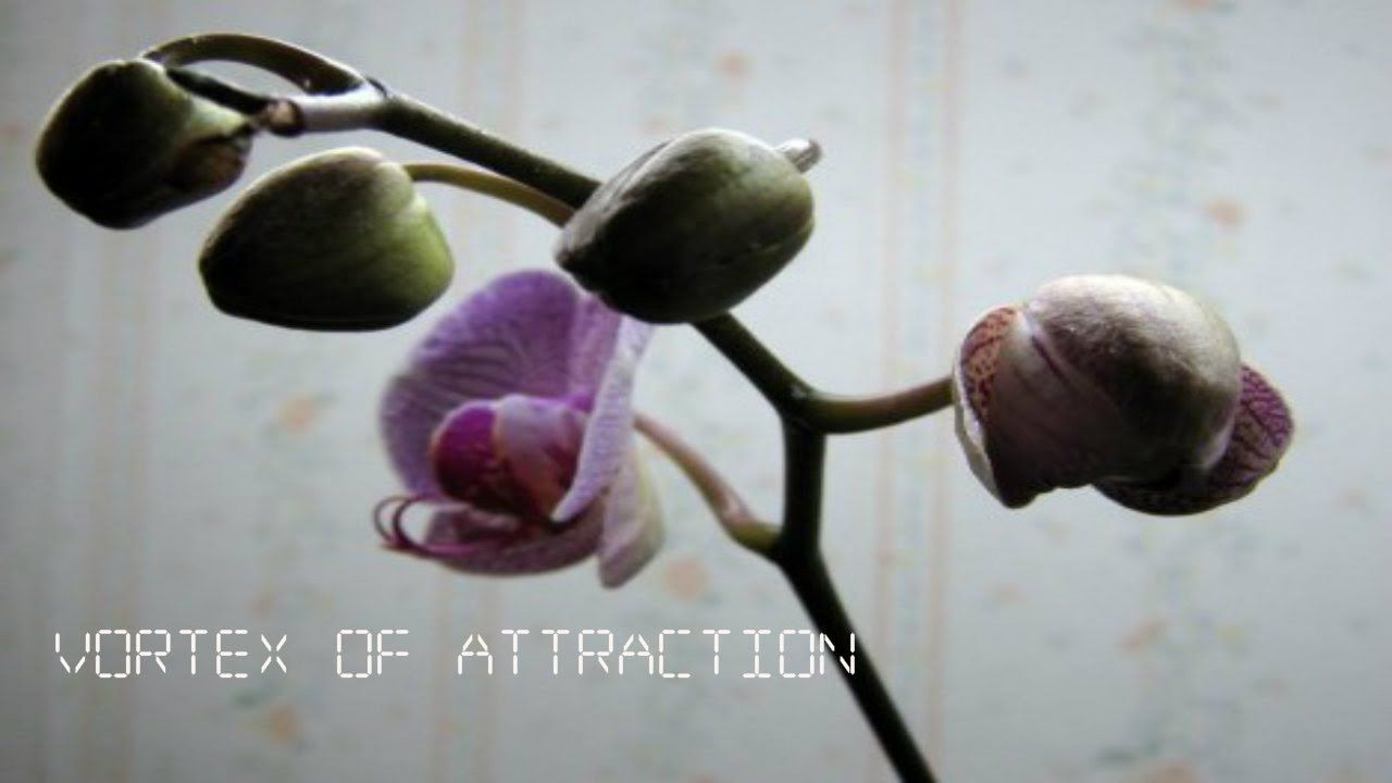 Manifesting a relationship from vortexofattraction abraham hicks