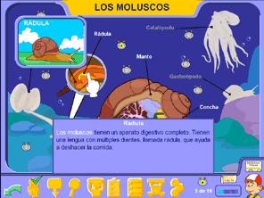 Los Moluscos En Primaria Los Animales Con Pipo Juegos Educativos