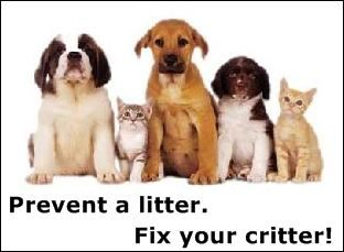 No Excuses Stopping Pet Overpopulation Starts With You Pets Essential Oils Dogs Pet Care