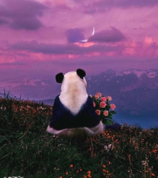 Cute Photos Quotes Sweets Miniensaiodiadascriancas Candy Ensaioinfantil Panda Wallpapers Panda Art Baby Panda Bears