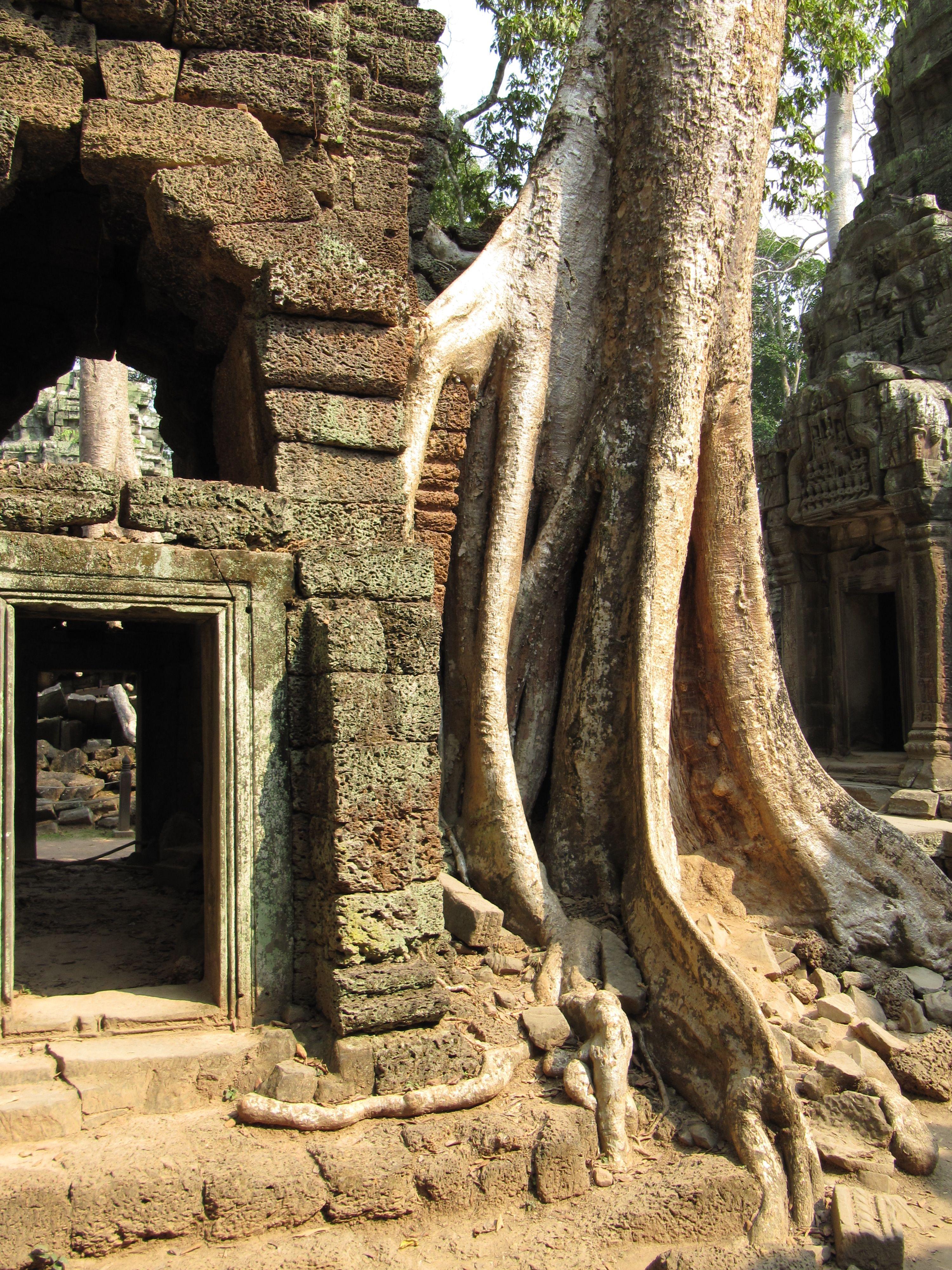 Saugatuck Michigan, Us Travel, Angkor Wat