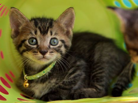 猫との縁 猫は自分で飼い主を選ぶ 出会い スピリチュアルな意味 可愛すぎる動物 子猫 可愛い子猫