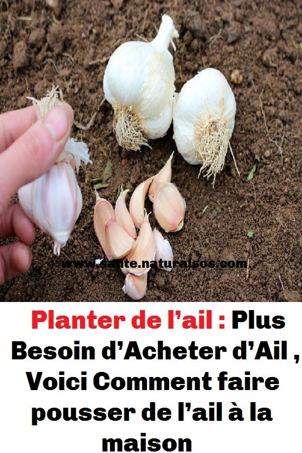Planter De L Ail Plus Besoin D Acheter D Ail Voici Comment Faire Pousser De L Ail A La Maison Garlic Vegetables