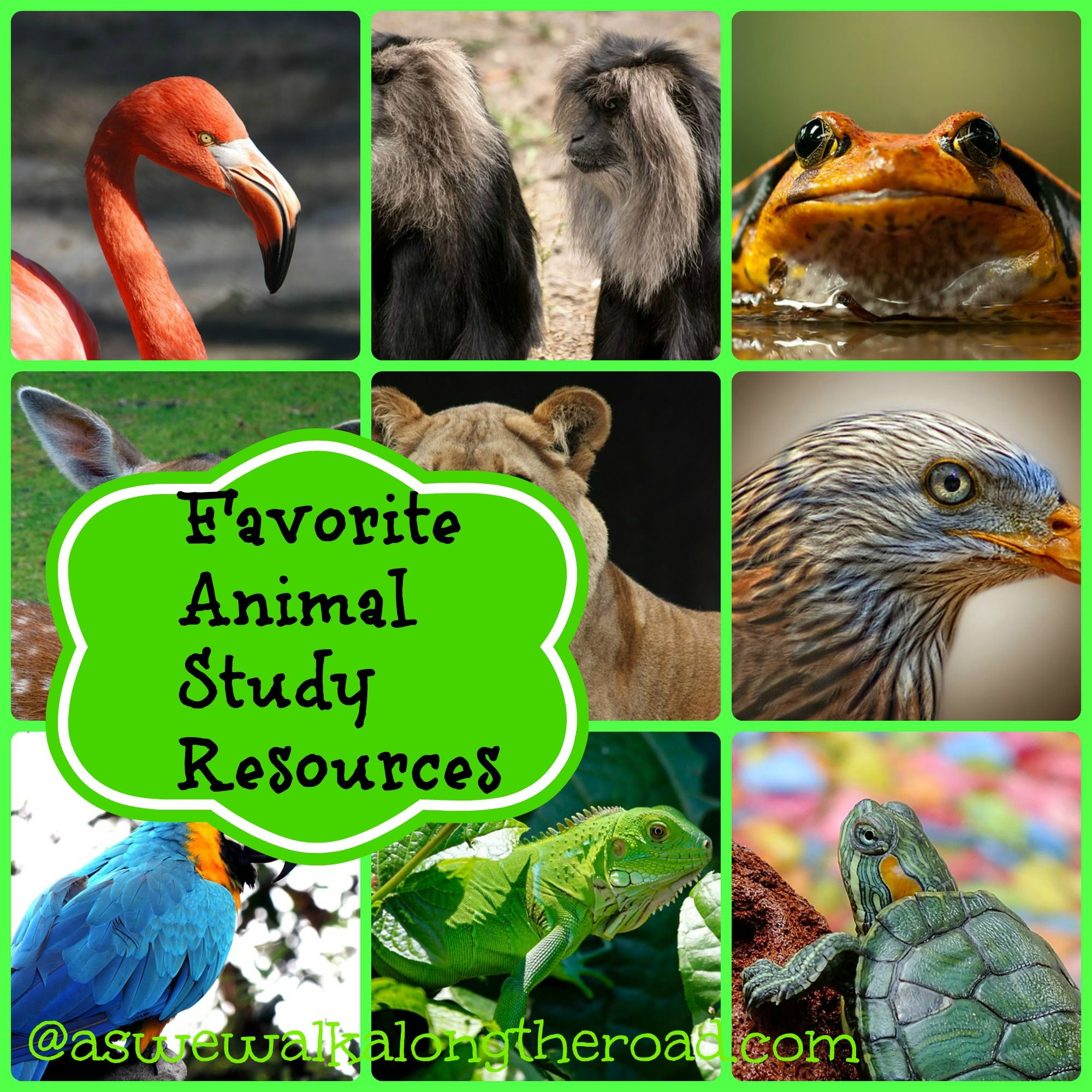 Favorite #animal resources for kids