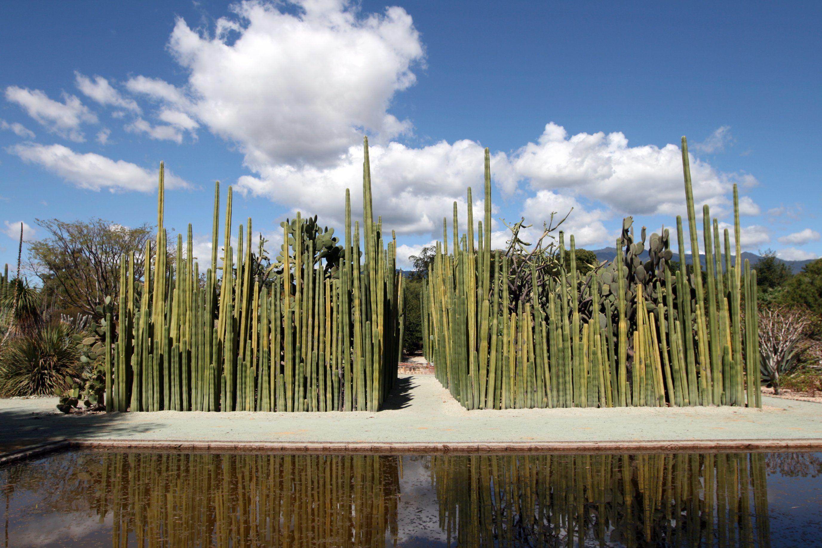 Jardin etnobotanico oaxaca mexico photography for Jardin oaxaca