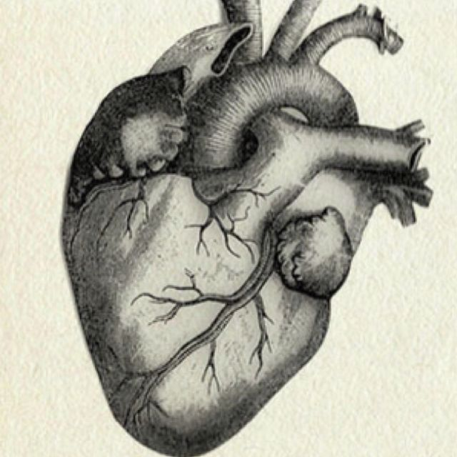 A Vintage Drawing Of A Flawless Human Heart And This Ones Kinda