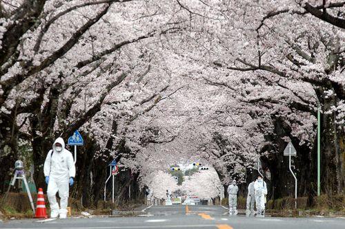 立ち入り 禁止 区域 福島 福島の立入禁止区域で増える動物、放射線の影響は?