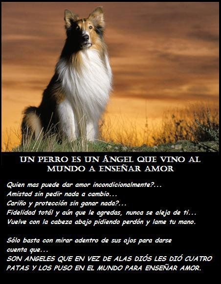 Un Perro Es Un Angel Que Vino Al Mundo A Ensenar Amor Animales