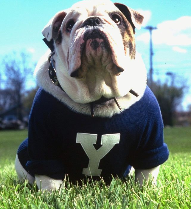 Mutt Madness Which Universities Have Real Dogs As Mascots