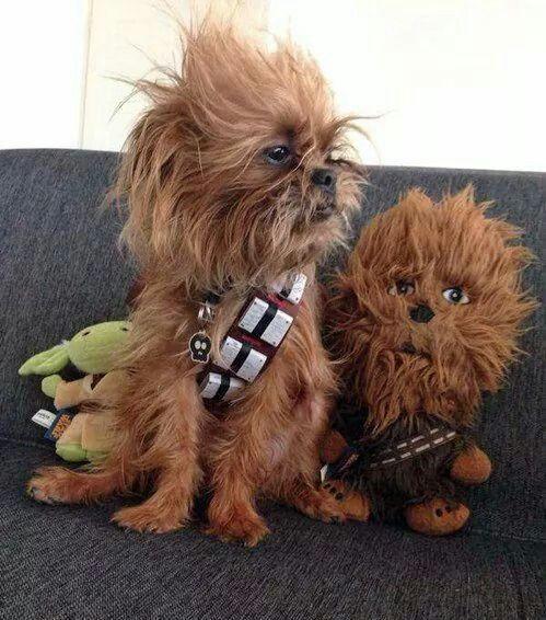 Look alike dogs