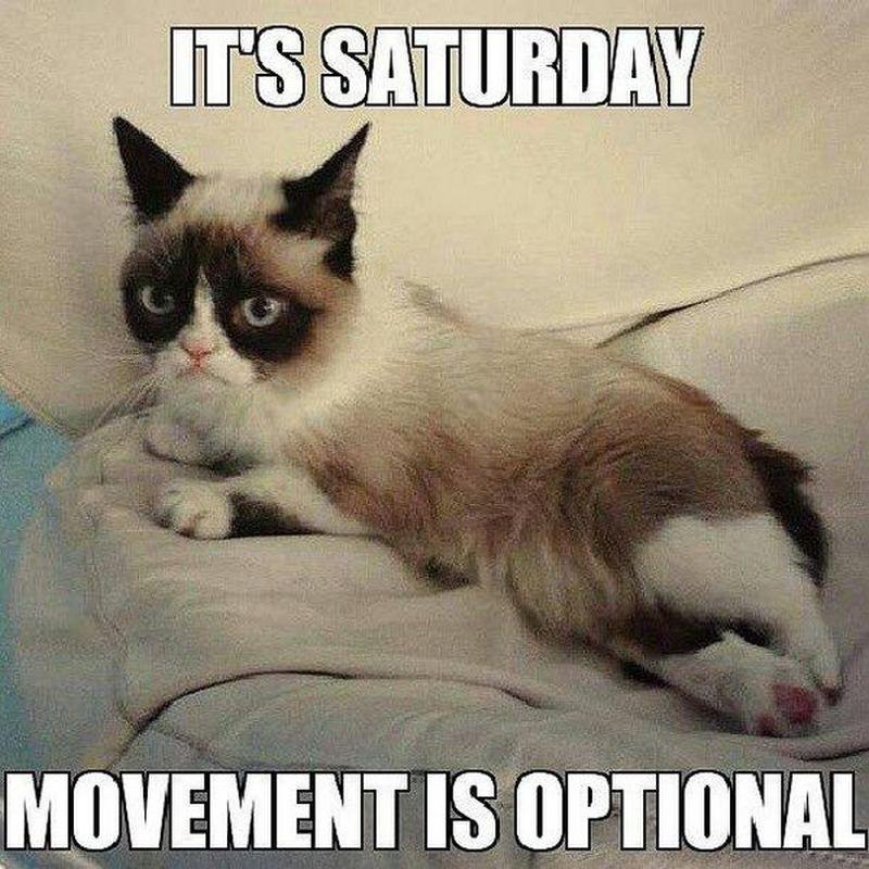 101 Funny Saturday Memes Will Make You Laugh From Morning Till Night Funny Cat Memes Funny Saturday Memes Saturday Humor