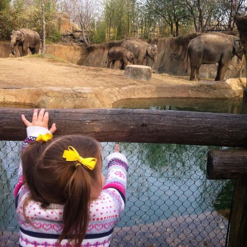 """Why do the elephants eat with their noses? I can't eat with MY nose!"""