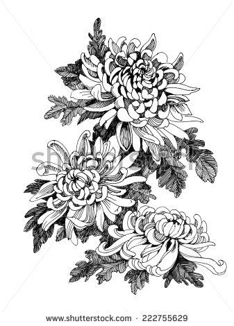 Hand Drawing Chrysanthemum Flower Vector Illustration Buy This Vector On Shutterstock Find Other Chrysanthemum Tattoo Peonies Tattoo Chrysanthemum Drawing