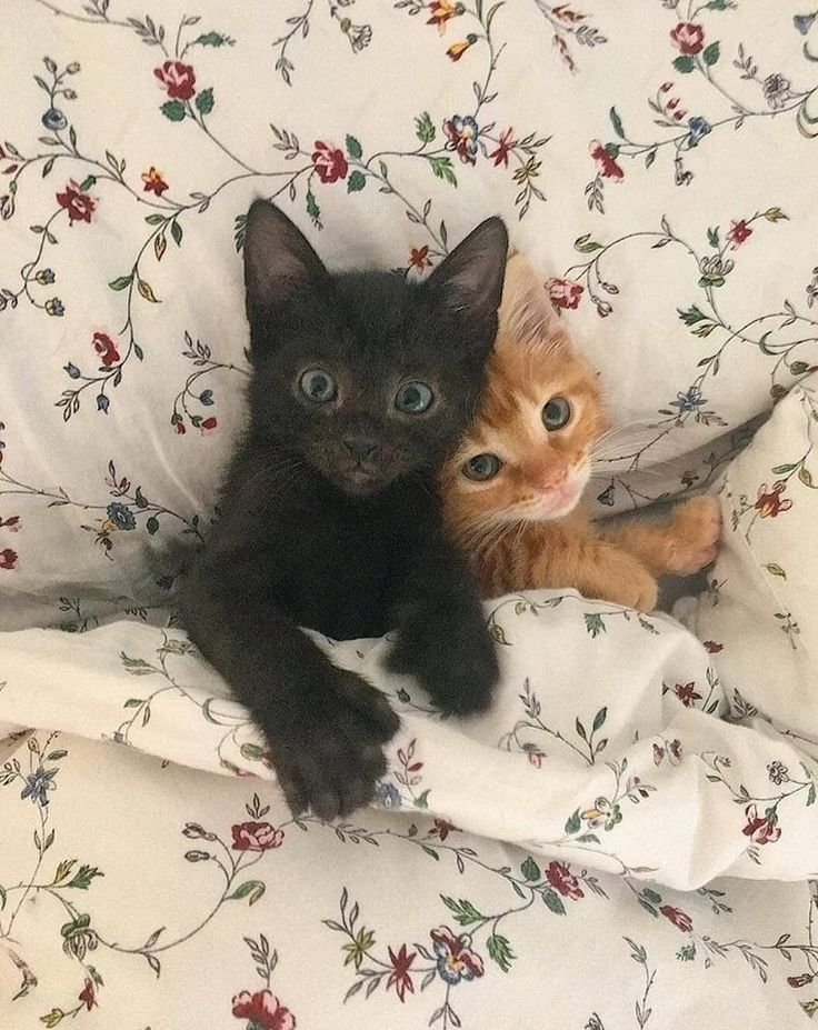 Photo of ¿Estás listo para tener un gato? – Lo que necesitas para empezar