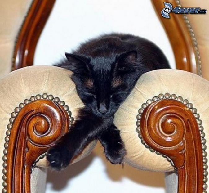 Chat Dormant Chat Endormi Illustration De Chat Animaux Les Plus Mignons