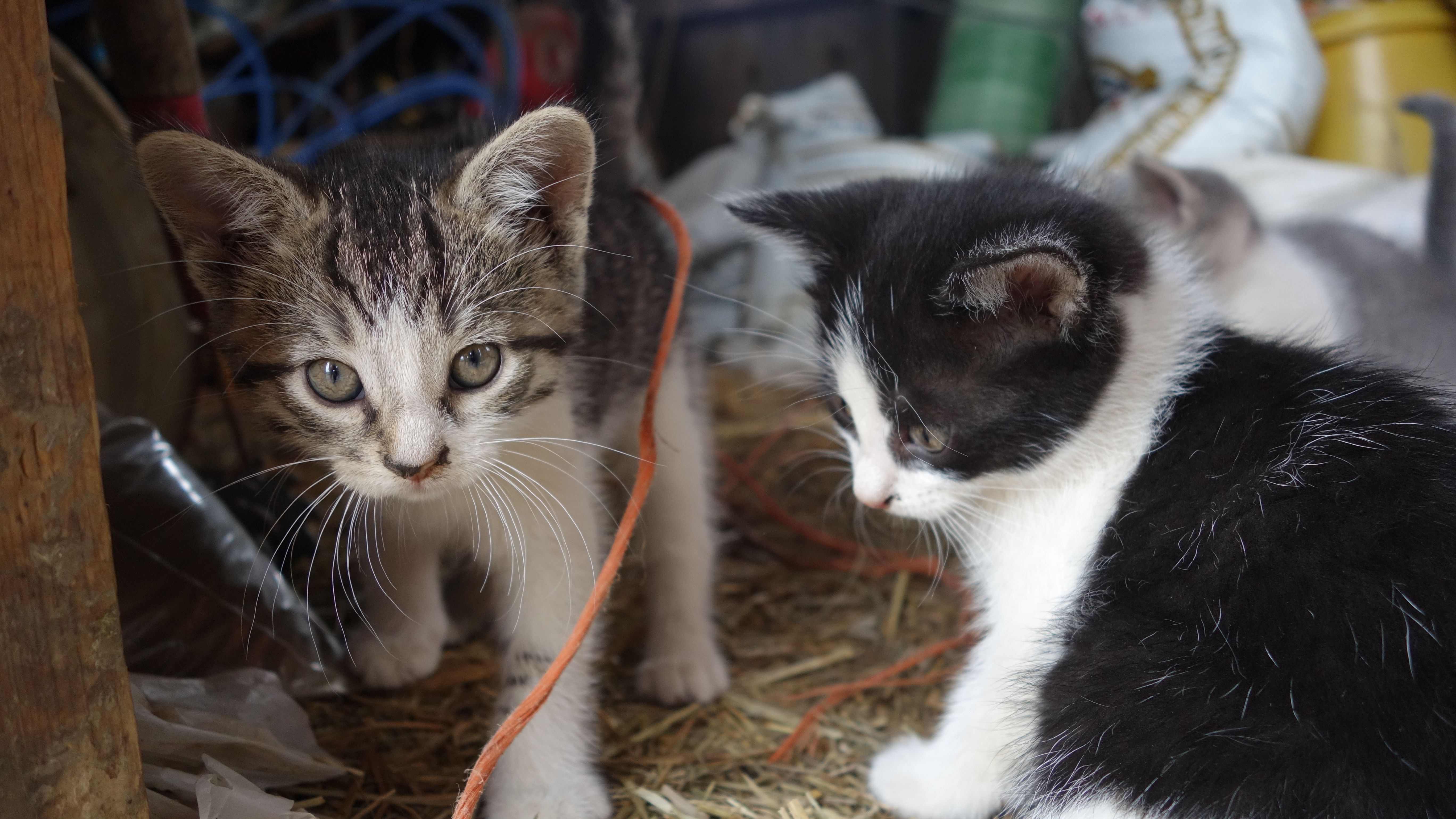 Cats in a barn cats animals pictures