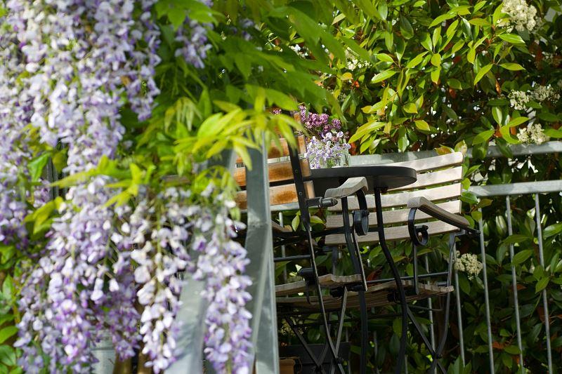 Pnacza Na Tarasie I Balkonie Swietnie Sie Sprawdzaja To Rosliny Na Taras Ktore Dodajom Mu Najwiekszego Uroku I Powabu Plants Balcony Beautiful