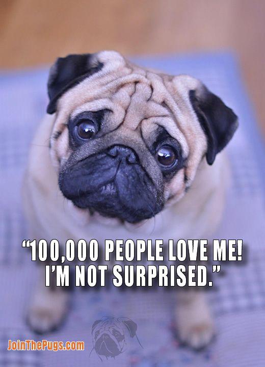 100 000 Pug Lovers On Facebook Pug Puppies Black Pug Puppies Pugs