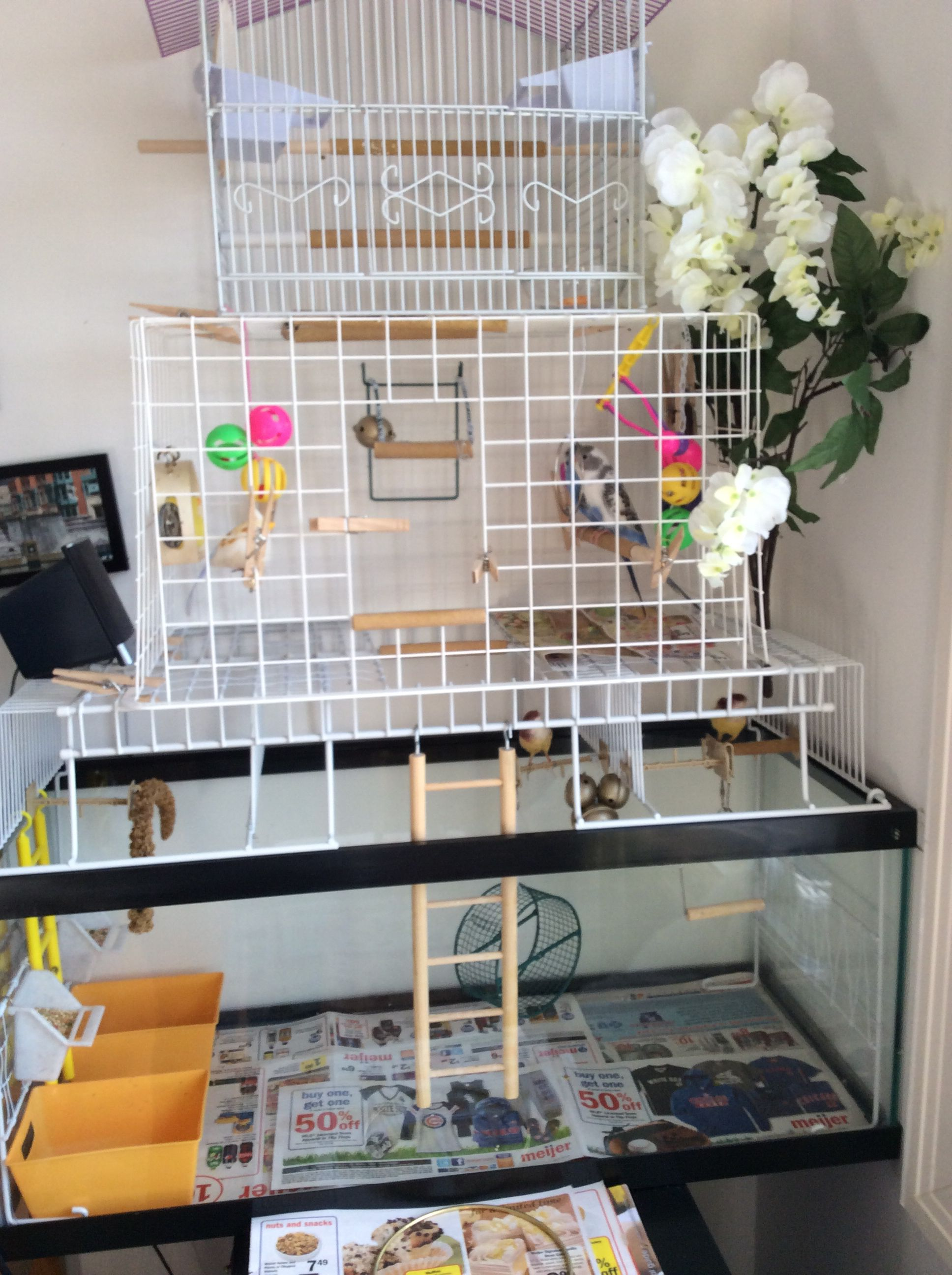DIY parakeet mansion! 20 gallon fish tank, closet metal baskets ...