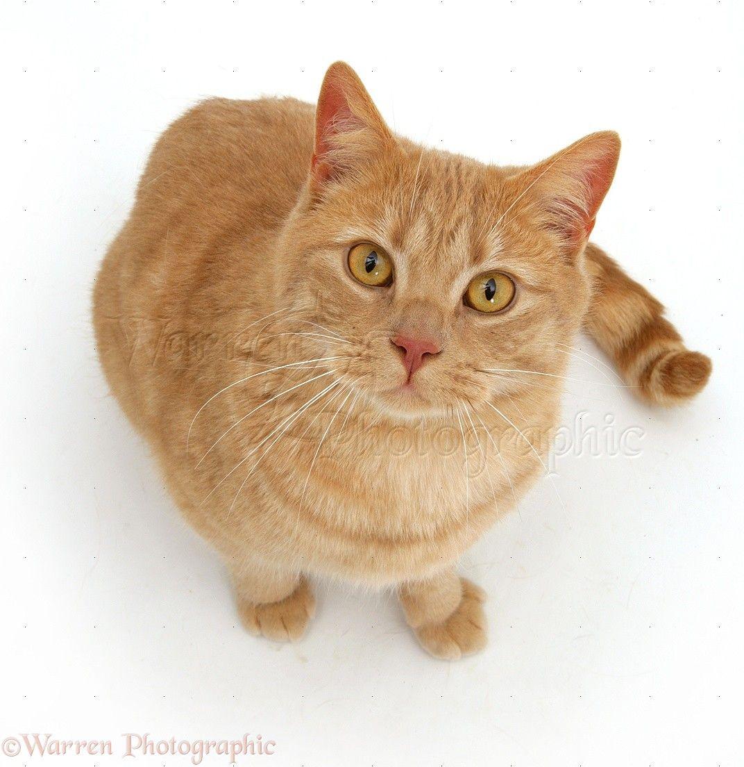 cat standing Google haku Cats Pinterest