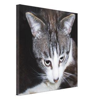 I love my cat impresión en lienzo