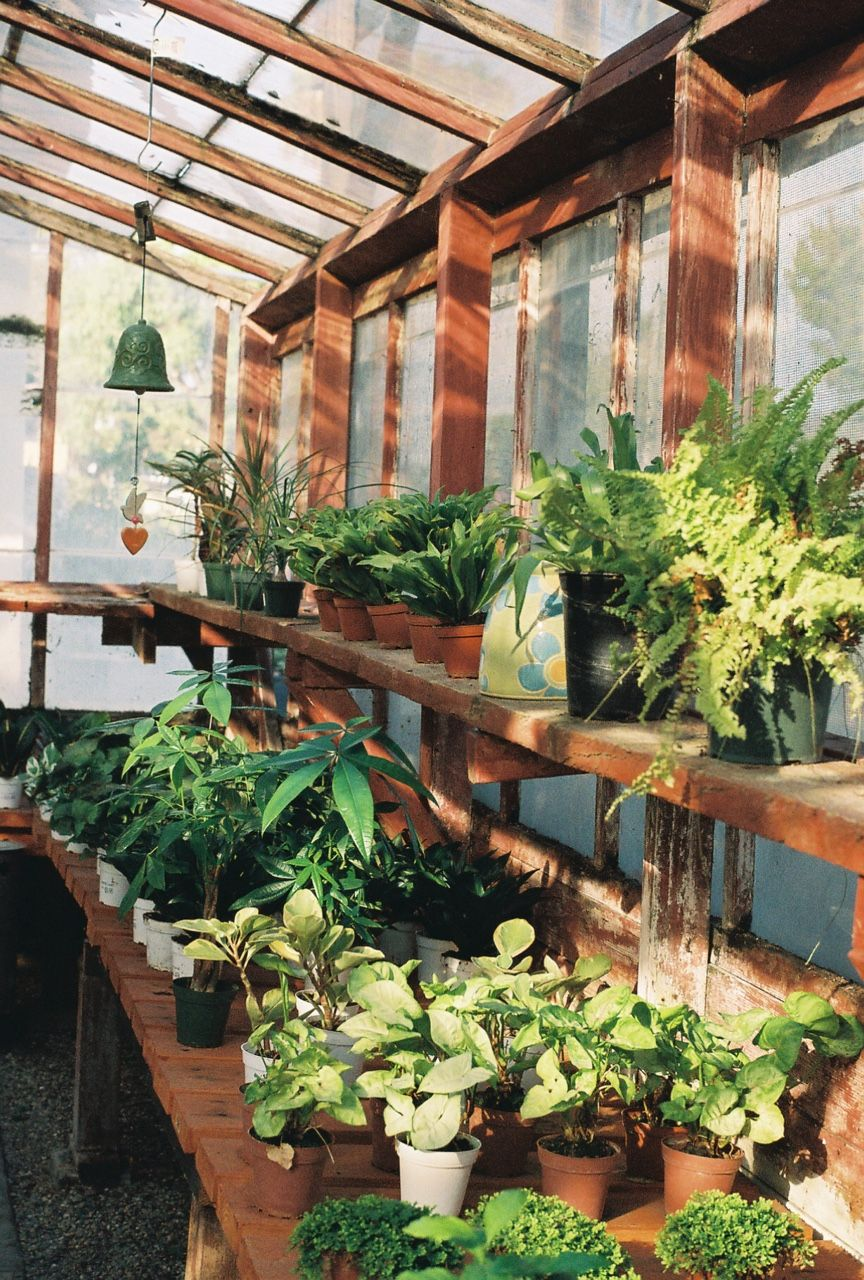 There Will Always Be Warmth Here Rustic Greenhouses Backyard Greenhouse Outdoor Greenhouse Backyard greenhouse near me