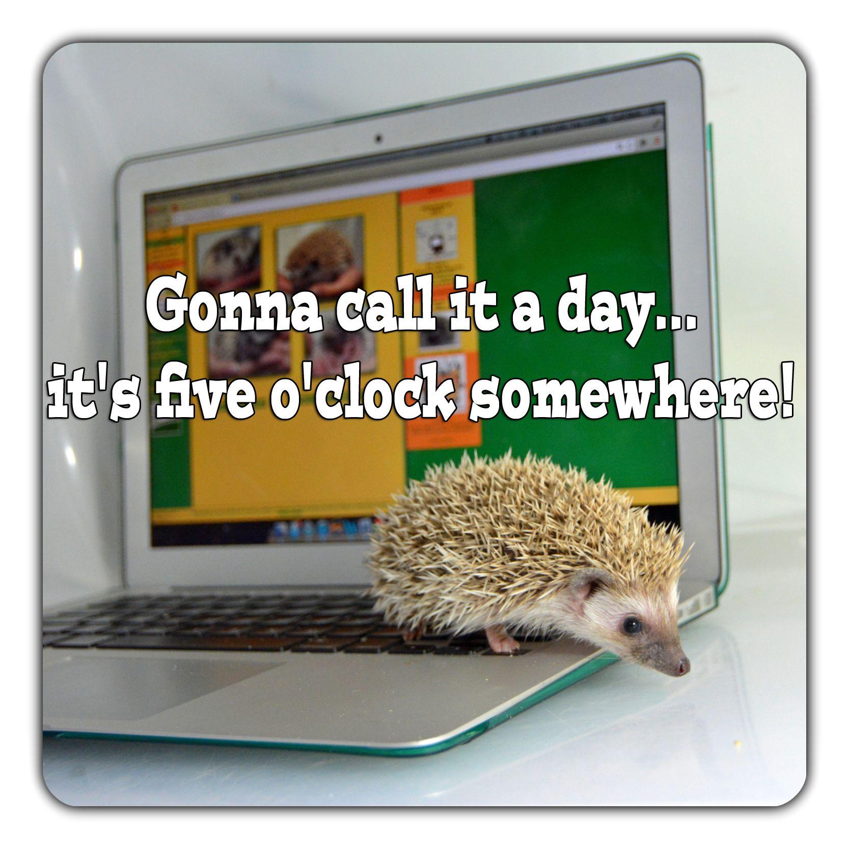 #Hedgehog #Meme #Fiveoclock #Lol #Computer #Millermeade #Breeder #Funny