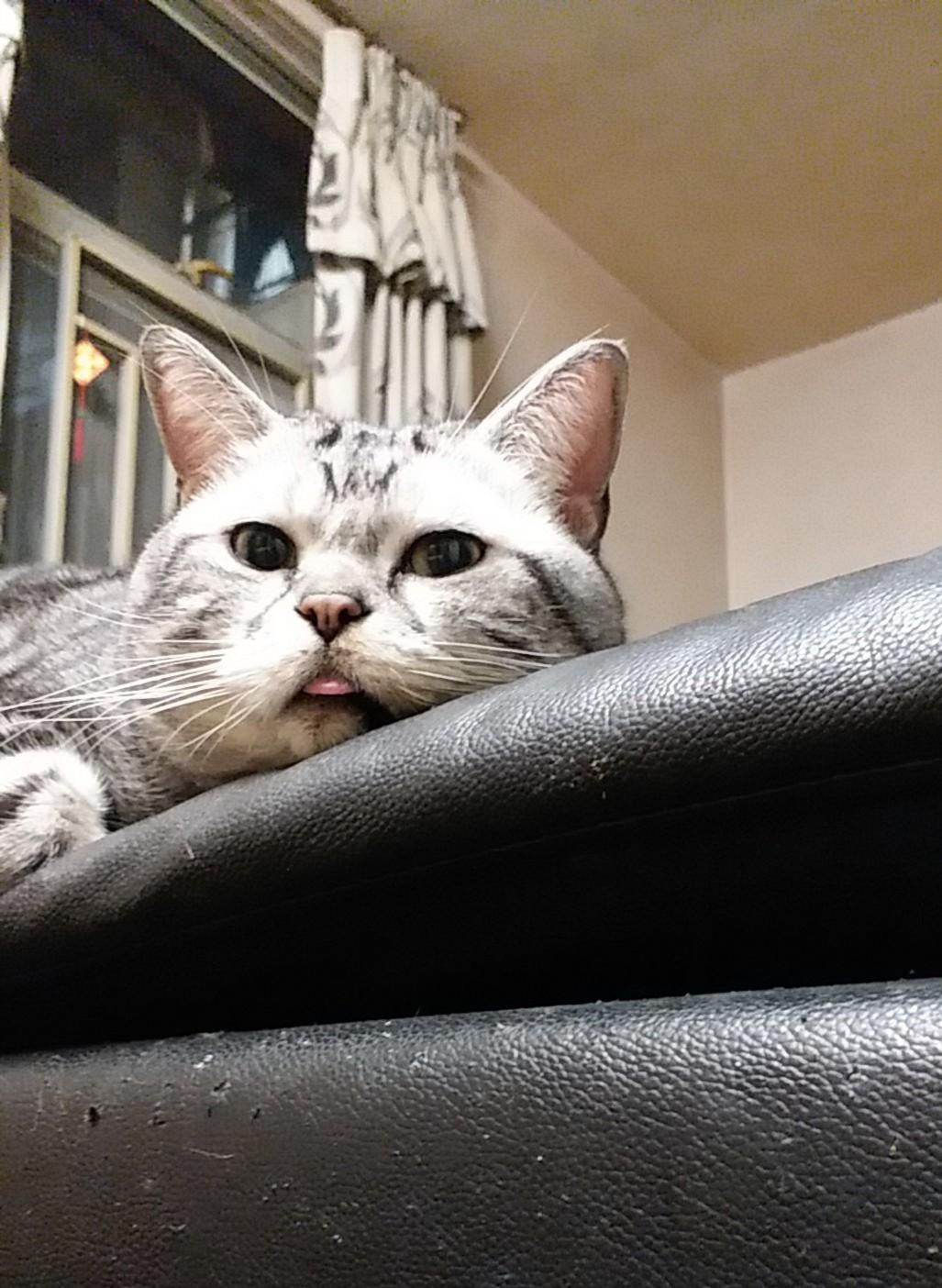 Pin By Rumah Minimalis Rubymoon On Gatititoooos Cute Cat Gif Kittens Cutest Animal Rescue Stories