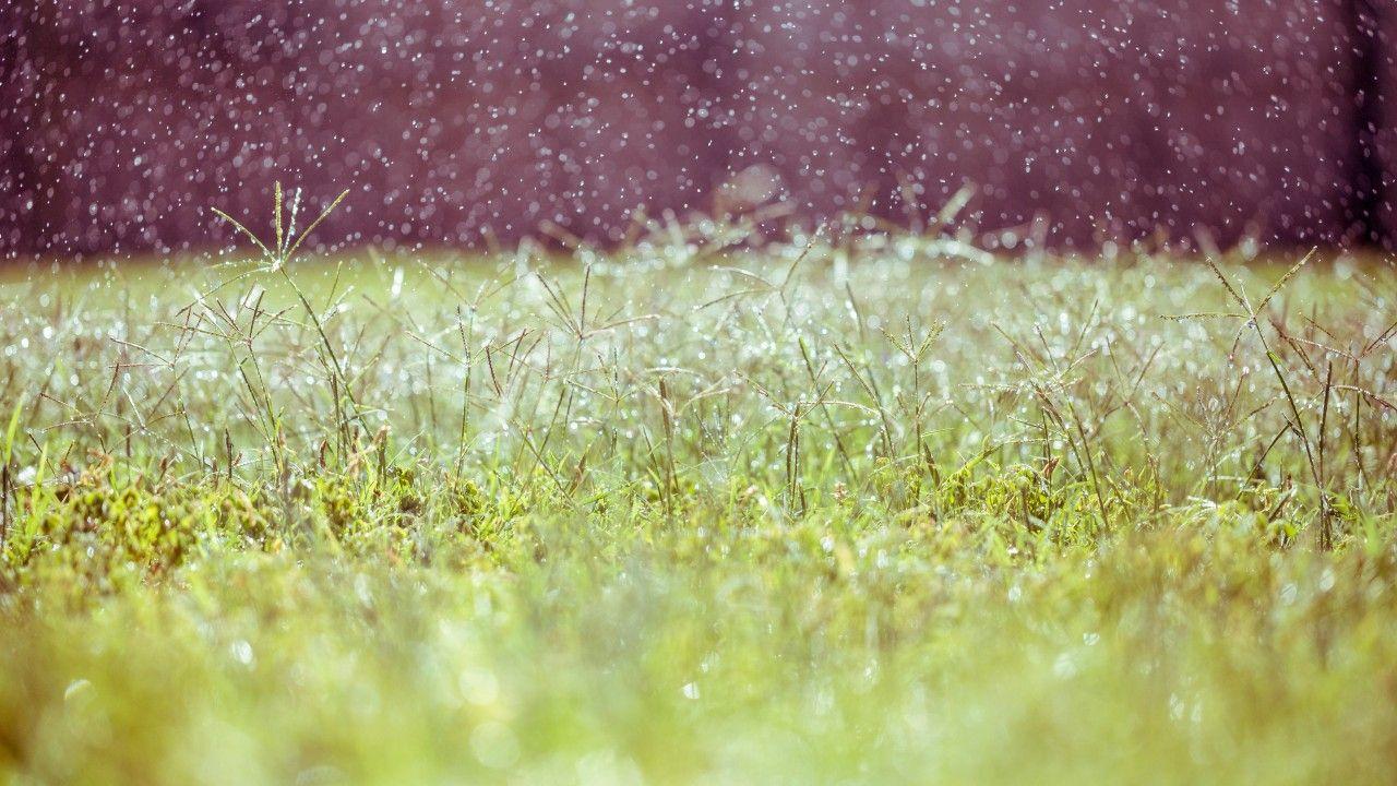 Meadows, wildflowers, blur