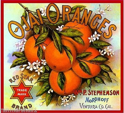 Jacksonville Florida Dan/'l Brand Daniel Boone Orange Fruit Crate Label Print