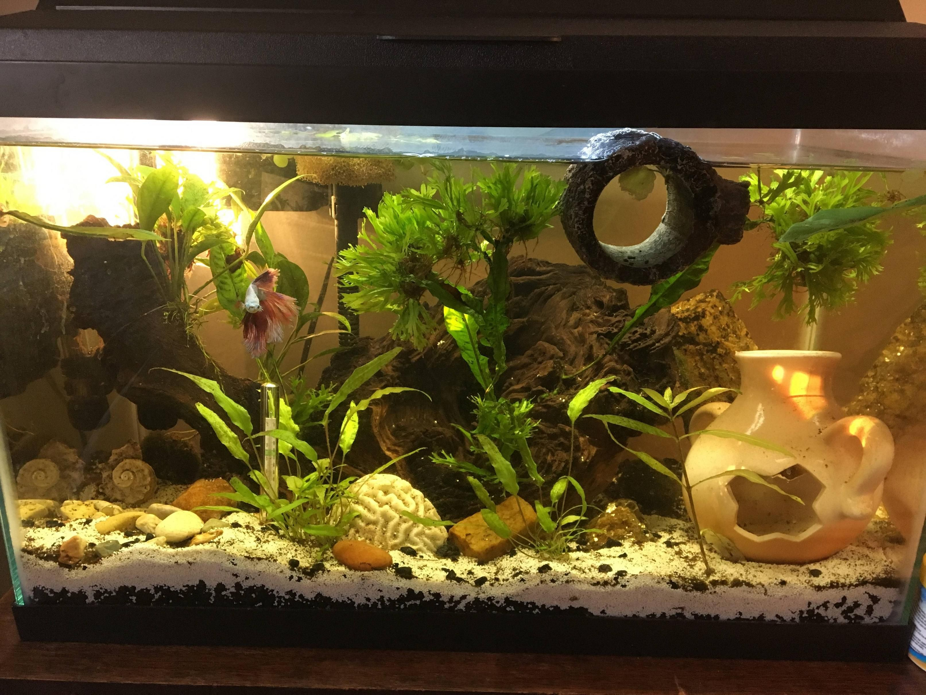 I decided it was time for a change in my g aquariums