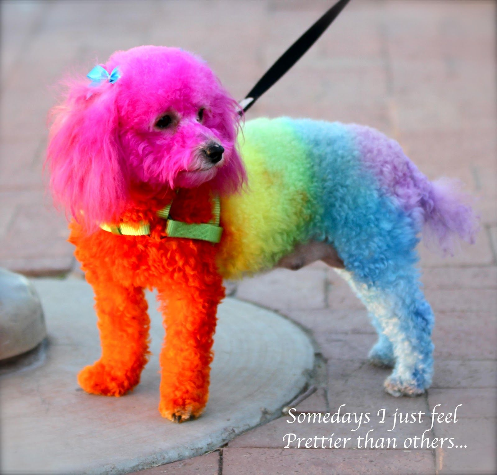 40 and Still [somewhat] Sane: Rainbow Dogs | ANIMALS ...
