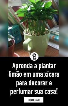 Aprenda a plantar limão em uma xícara para decorar e