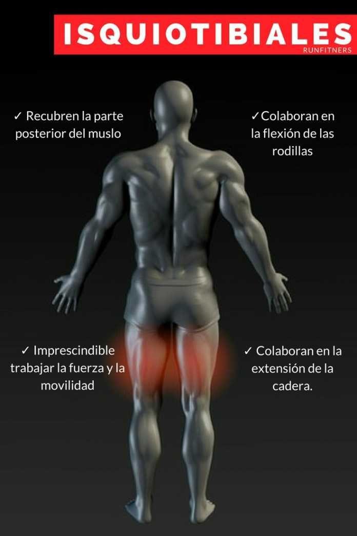 ✓ ISQUIOTIBIALES: Funciones, ejercicios y estiramientos [+VIDEOS ...