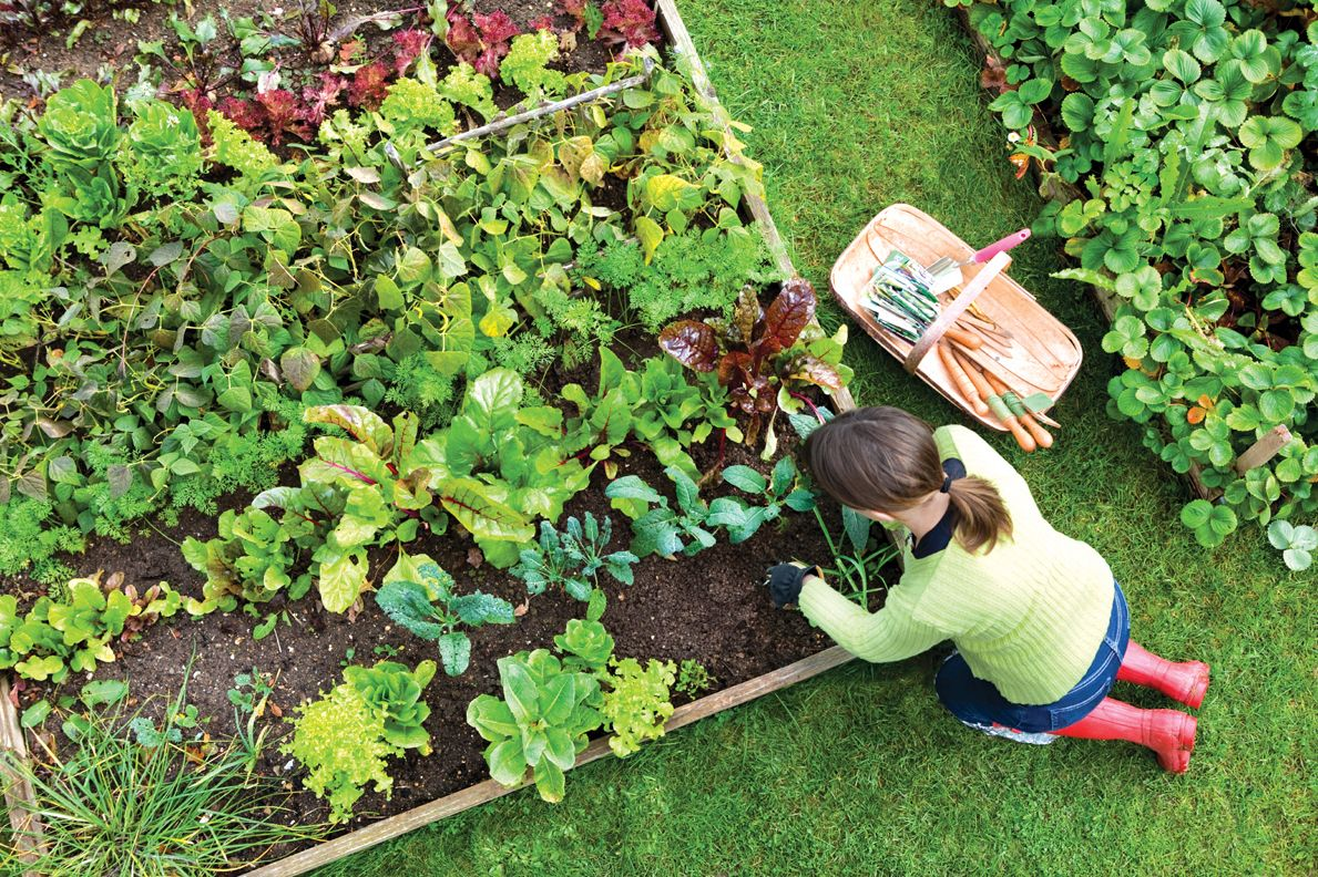 Everything you Need to Know About Vegetable Gardening in One Graphic