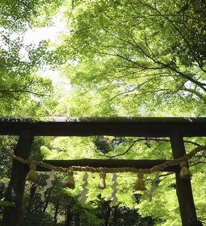 京の青もみじ〜野宮神社|おじゃかんばん『フォトブラ☆散歩物語』