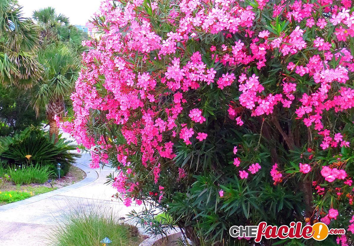 Piante Da Siepi Immagini piante da siepe - cerca con google | siepi, piante